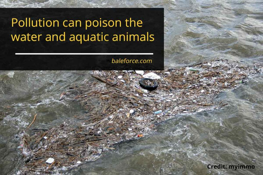 Pollution can poison the water and aquatic animals