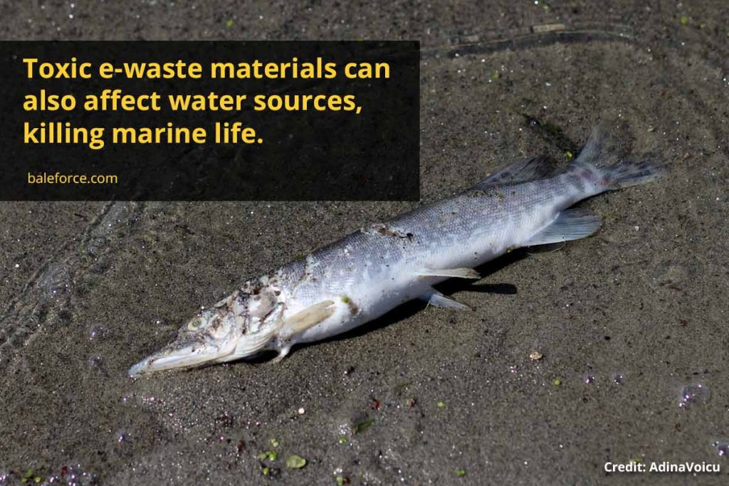 Toxic e-waste materials can also affect water sources, killing marine life.